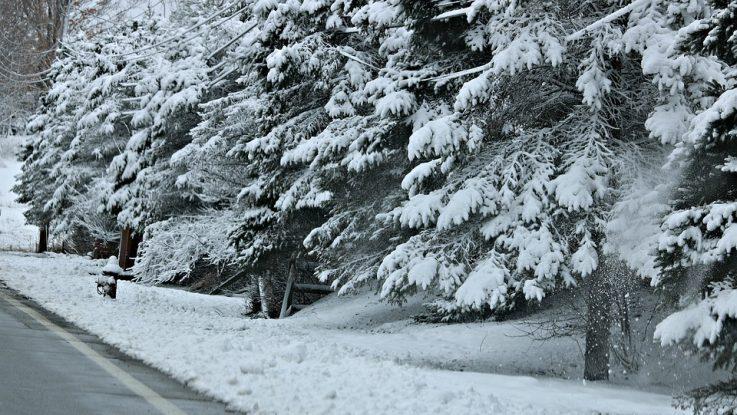 Cani e neve